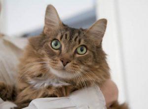 Pet friendly Apartment Rentals